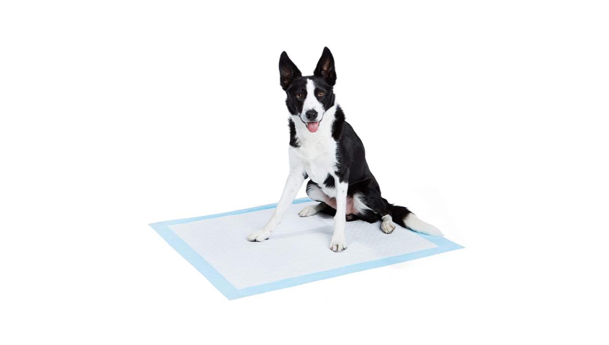 AmazonBasics-Dog-and-Puppy-Pee