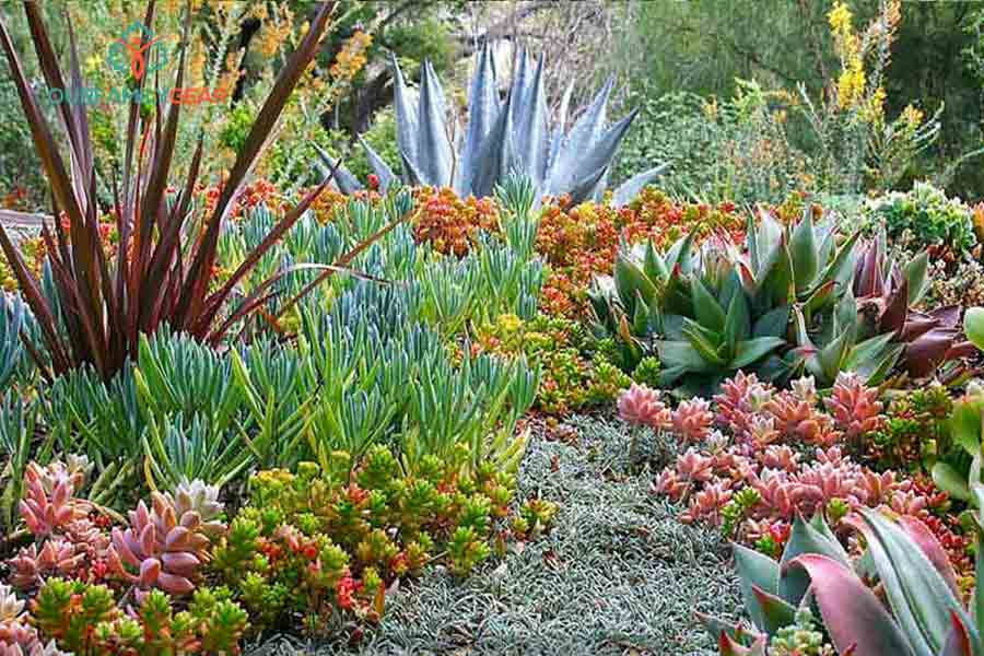 make a succulent and cactus outdoor garden